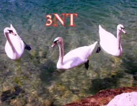 הכרזת 3NT מסיימת את כל ה-Auctions (המכרזים)