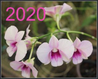 ביום ה-31.12.2019 הסתיימה שנת הפעילות השמינית של האתר וכעת מתחילה השנה התשיעית