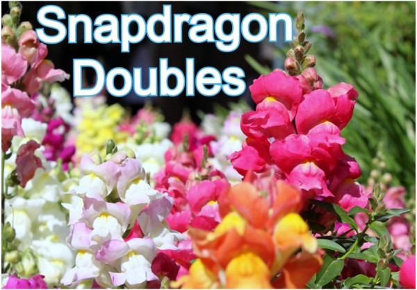 Snapdragon Doubles